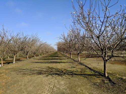 pavasaris, obuoliai, medžiai, vaisių sodas, sodai, begalybė, Žemdirbystė, obuolių sodai