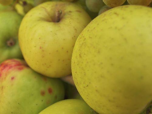 obuoliai,vaisiai,ruduo