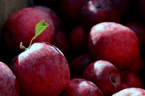 obuoliai,raudoni obuoliai,vaisiai,sveikas,raudonas obuolys,sultingas,ekologiškas,užkandis,traškus,ruduo,ingredientas,žaliavinis