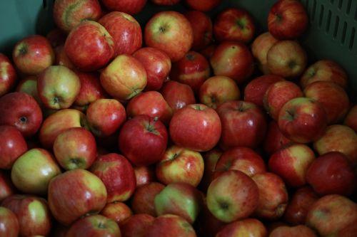 obuoliai,vaisiai,ruduo,vitaminas