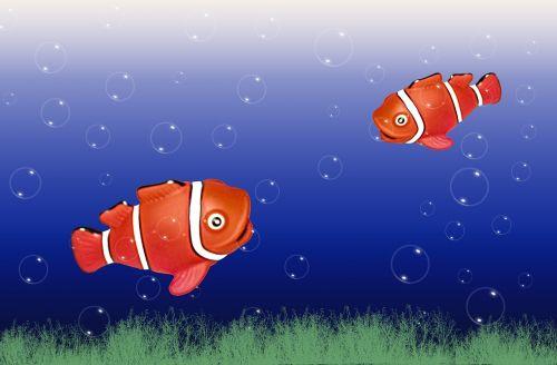 akvariumas,žuvis,vanduo,žuvis užplūsta,povandeninis pasaulis,koralų žuvis,jūros žuvys,nemo,mėlynas,meeresbewohner,anemone žuvis,klouna žuvis,padaras,jūrų augalija ir gyvūnija,vandens tvarinys,povandeninis,jūros gyvūnas,gyvūnas