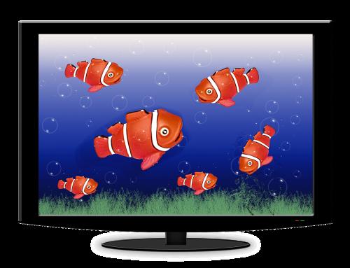 akvariumas,tv,žuvis,vanduo,žuvis užplūsta,povandeninis pasaulis,koralų žuvis,jūros žuvys,nemo,mėlynas,meeresbewohner,anemone žuvis,klouna žuvis,padaras,jūrų augalija ir gyvūnija,vandens tvarinys,povandeninis,jūros gyvūnas,gyvūnas,jūra,raudona,grafika