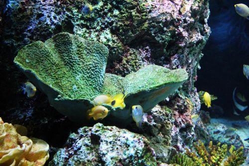 akvariumas, žuvis, žuvys, vanduo, vandens, akmenys, kriauklės, koralai, akvariumas