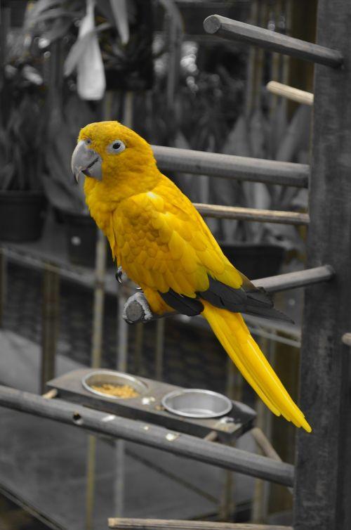 arara,gyvūnai,gamta,paukštis,atogrąžų paukščiai,paukštis,atogrąžų paukštis,paige
