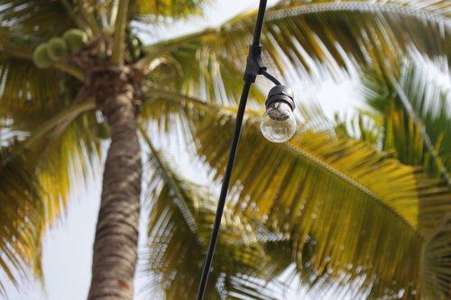 arekiečiai, medis, Tropical, kokoso, pobūdį, egzotiškas, šventė, papludimys, lengvumas, Egzotiškas, rojus, vasara, sala, kelionė, gražus, gniužulų, lauke, saulė, Kosta, Vallarta, Meksika, palmė, Palma