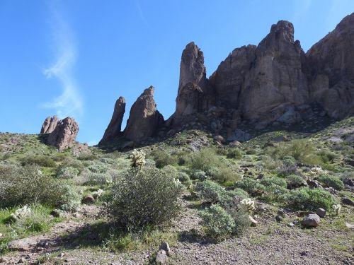 Arizona,kaktusas,dykuma