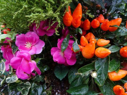 gėlė, gėlės, ruduo, kritimas, spalvos, spalva, medis, medžiai, miškas, miškai, mediena, miškai, kaimas, gamta, sezonas, sezoninis, flora, augti, auga, sodas, sodai, krūmas, krūmai, sodininkystė, sodininkystė, žalias, augalas, augalai, botanikos, botanikos, dirbtinė flora