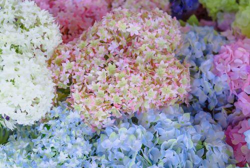 dirbtinės gėlės,gėlės,amatai,netikros gėlės,rausvos gėlės,plastmasinis,artefaktas,puokštė,dirbtinis uždavinys,dirbtinis