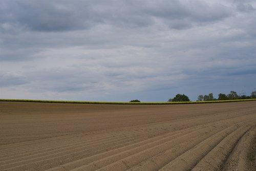 šparagai, šparagai auginimą, žemės ūkio, ariama, Žemdirbystė, laukas, ūkininkas, auginimas, atsipalaidavimo iki, kraštovaizdis, Bauer, mitybos, žemės dirbimas, žemės ūkio nuotrauka, lauko ekonomika, augalininkystė, žemės, getreideanbau, ūkis