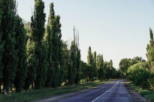 asfaltas,grožis,mėlynas,Karpatai,Debesuota,Šalis,kaimas,Kelionės tikslas,vairuoti,miškas,laisvė,greitkelis,žolė,žalias,greitkelis,kalnas,horizontas,kelionė,pieva,judėjimas,kalnas,kalnuose,niekas,ne miesto,rojus,perspektyva,pušis,kelias,kelio,maršrutas,kaimas,peizažas,dangus,greitis,greitkelis,vasara,saulės šviesa,saulėtas,turizmas,eismas,transportas,gabenimas,kelionė,medis,kelionė,ukraina,ukrainietis,kelias,mediena,gražus,šviesus,ruda,debesys,spalva,žinoma,tuščia,erdvė,plunksna,gėlė,žydėjimas,kraštovaizdis,šviesa,linija,vienišas,natūralus,gamta,atviras,ganykla,kelias,vaizdingas,paprastas,poliarizatorius,sezonas,sezoninis,erdvė,vieta,stepė,trasa,trajektorija,vaizdas,laukiniai,nuostabus,geltona
