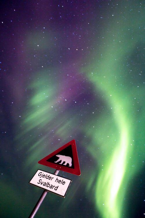 aurora,Aurora borealis,sniegas,šiaurės žiburiai,mėlynas žvaigždėtas dangus,alaska,poliariniai žiburiai,snieguotas kraštovaizdis,arktinė,žibintai,gamta,šviesos reiškinys,stebuklinga naktis,mėlynas ir žalia žvaigždėtas dangus,Šiaurės ašigalis,svalbaras,ilgai gyvena,plokštės,Baltoji meška,ženklas
