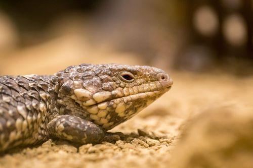 australia,Outback,gyvūnas,dykuma,krūmas,laukiniai,nuotykis,kaimas,Sidnėjus,nsw,aplinka,upė,peizažas,dykuma