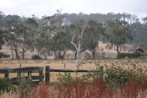 australia,krūmas,vasara,gamta,kraštovaizdis,medis,Outback,aussie,lauke,sezonas,bushland,guma