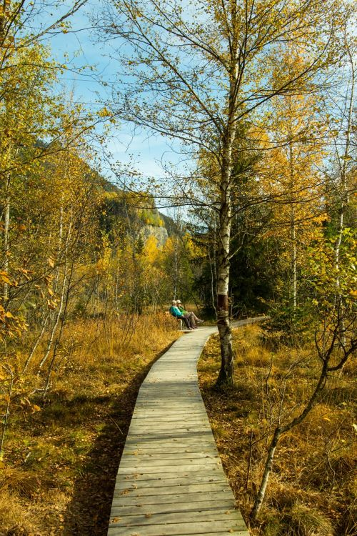 ruduo,miško takas,medinis takas,kiauras,kritimo lapai,žygiai,rudens miškas,miško takas,miško pakraštis,poilsis,miškas,gamta,toli