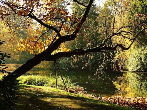 ruduo,medis,aukso ruduo,kritimo spalva,lapai,šviesa,nuotaika