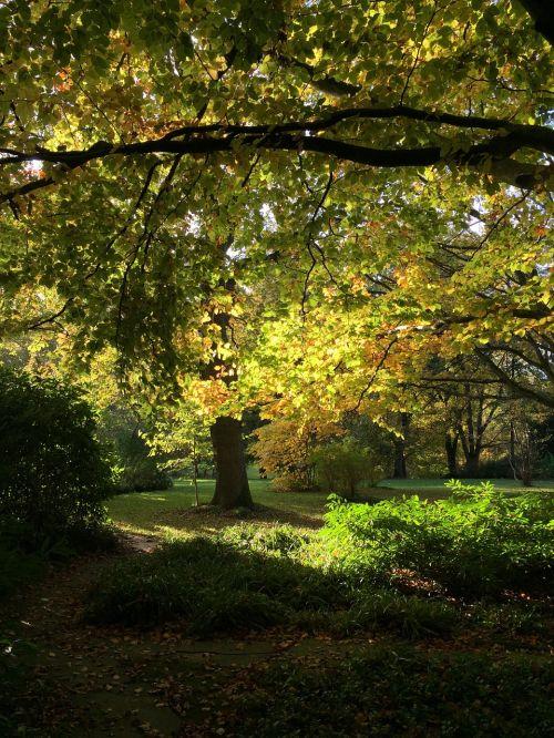 ruduo,medžiai,lapai,aukso ruduo,nuotaika,šviesa,saulė
