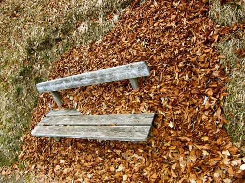ruduo,bankas,lapai,sezonai