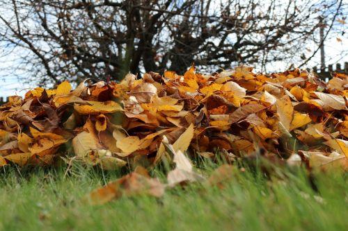 ruduo,lapai,kritimo lapija,aukso ruduo,trumpalaikis laikotarpis