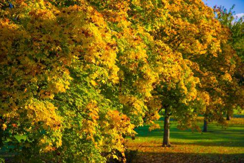 ruduo, mėlynas, žolė, žalias, parkas, medžiai, oras, kelias, ruduo