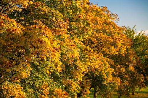 ruduo, mėlynas, žolė, žalias, parkas, medžiai, oras, medis, ruduo