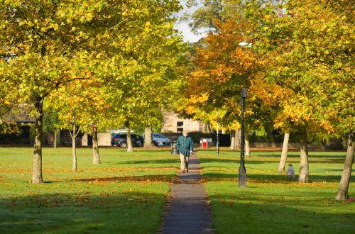ruduo, mėlynas, žolė, žalias, parkas, medžiai, oras, ruduo