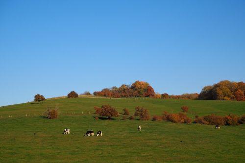 ruduo,kritimo lapija,herbstimpressija,ganykla,karvės,aukso ruduo,medžiai,vaizdingas