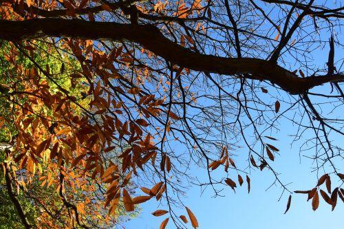 ruduo,Stick,sausas medis,senas medis,kraštovaizdis,gamta,kritimo spalvos,aistra,lapai džiūsta,lapai,medžiai,sausas lapas,bagažinė,sol,filialas,sausas šakeles,sausas lapai,mediena,aplinka,miškai,gyvenimas,seni lapai,miškas,dangus,skraidantis