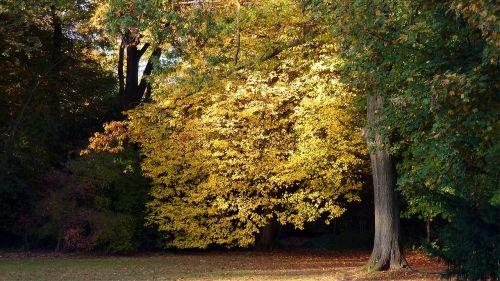 ruduo,rudens lapas,kritimo spalva,lapai,rudens spalvos,spalvos,rudens miškas,veidrodis,spalvinga,saulė,dažymas,parkas,aukso ruduo,atsiras,geltona,medis,Spalio mėn,rudens apdaila,miškas,rudens motyvai,vėlyvas ruduo,ruda