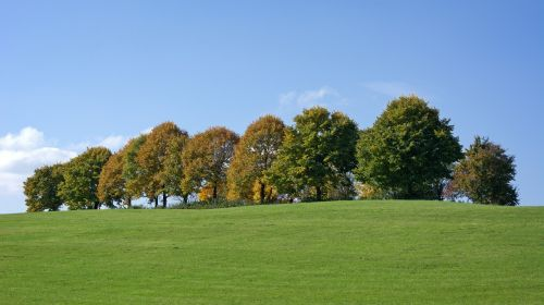 ruduo,medžiai,grupė,lapai,dažymas,aukso ruduo,gamta