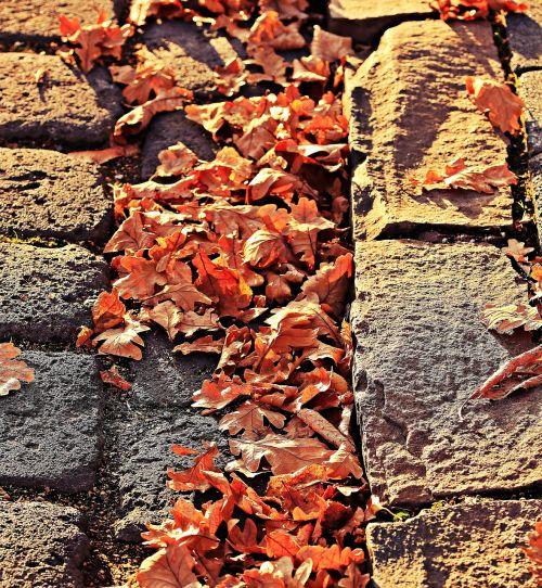 ruduo,lapai,aukso ruduo,palieka rudenį,kritimo lapija,lapai,gamta,rudens spalvos,sezonai,auksinis,kritimo lapai,nuotaika,out,kritimo spalva,tikri lapai,nudrus,lietaus latakai,kritęs,rudens spalvos,sausas,niūrus,ruda,brangakmeniai,abendstimmung,vakaras