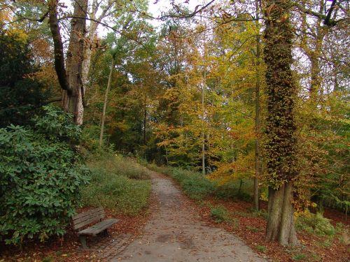 ruduo,kritimo lapija,toli,aukso ruduo,lapai,miškas