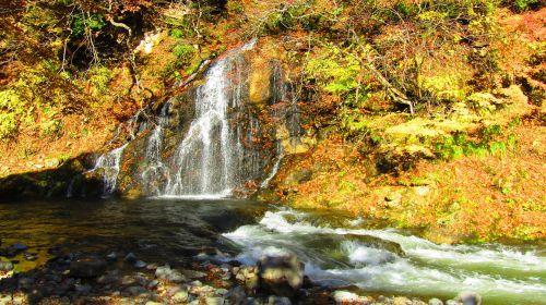 ruduo,klevas,klevo lapas,rudens lapai,Japonijos kritimas,arboretum,kraštovaizdis,kalnas,geltona,žiūrėti rudens lapus,krioklys,vanduo,upė,Saunus,shimizu krioklys,natūralus vanduo,lauke,siena,miškas,Turistų kelionės tikslas,srautas,šviesa
