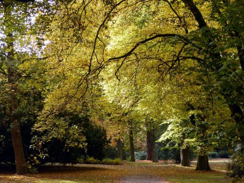 ruduo,lapai,aukso ruduo,medžiai,auksinis spalio mėn .,rudens miškas,geltona,spalvinga,farbenspiel,rudens nuotaika