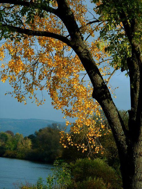 ruduo,rudens medis,rudens medžiai,kritimo lapai,rudens spalvos,rudens spalvos,rudens miškas,gamta,lapkritis,Spalio mėn,parkas,september,miškas