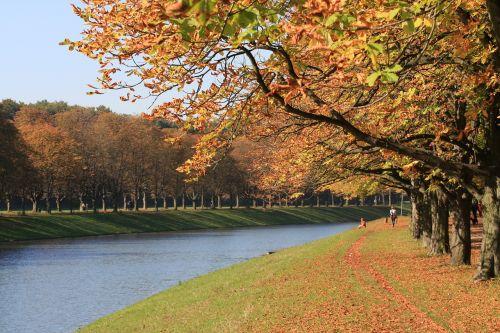 ruduo,kritimo lapija,palieka rudenį,spalvinga,medžiai,aukso ruduo