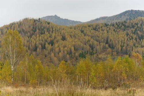 ruduo,kalnai,kraštovaizdis,diena,gamta,medžiai,sniego viršutinės smailės,kelionė,vaizdingas,dangus,Rusija,Siberija,kalnų shoria