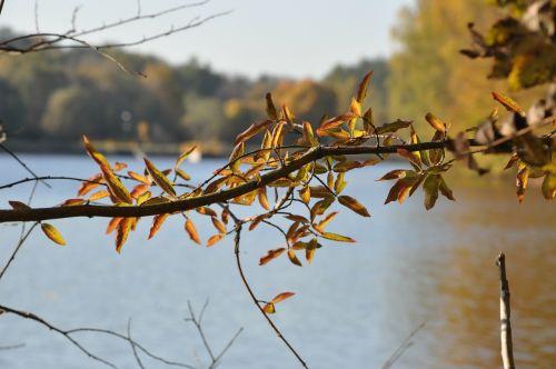 ruduo,sprigas,lapija,miškas