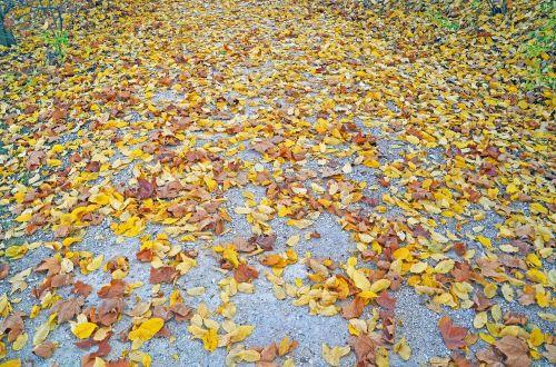 ruduo,lapai,kritimo lapija,gamta,aukso ruduo,toli,auksinis
