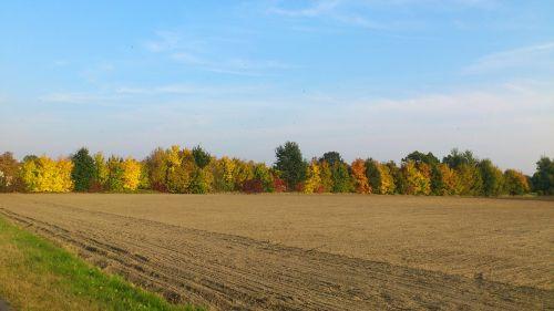 ruduo,gamta,kritimo lapija,farbenspiel,auksinis spalio mėn .,rudens miškas