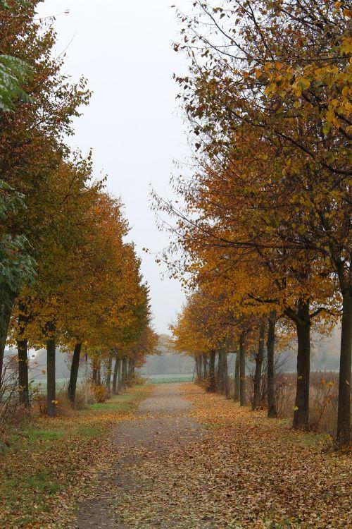 ruduo,alėja,toli,kritimo spalva,medžiai,aukso ruduo,vaikščioti