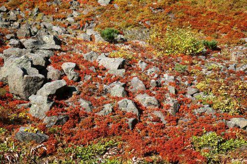 ruduo,kalnų plynaukštė,akmenys,rudens lapija,raudonieji lapai,žolė,tundra,kraštovaizdis