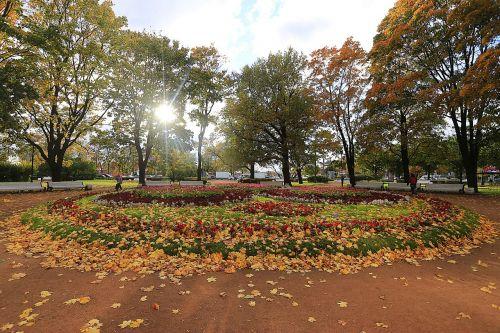 ruduo,kritimo spalvos,nuotaika,Sankt Peterburgas,Rusija,puiku,mielas,gražiai,laikas,aukso ruduo,rudens gamta,lapai,rudens spalvos,gamta,listopad,rudens lapai,rudens miškas,rudens lapas,augalas,vaikščioti,geltonieji lapai,mėlynas dangus,geltonas lapas,medis,kraštovaizdis,gyvoji gamta,nuotrauka,geltonas lapas