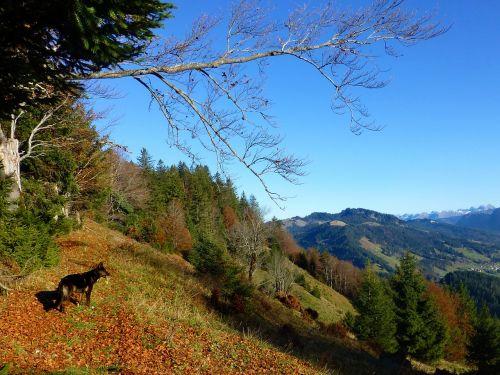 ruduo,Allgäu,kalnai,farbenpracht