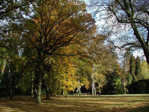 ruduo,gamta,nuotaika,aukso ruduo,lapai,kritimo lapija,auksinis,kraštovaizdis