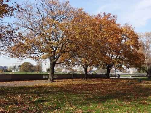 ruduo,medis,gamta,kraštovaizdis,lapai,geltona,žalias,dangus,sausas lapai,lapai yra,augalas,taika,medžio audinys