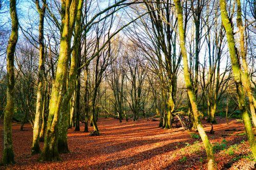 ruduo,lapai,medžiai,medis,kritimas,sezonas,raudona,rudens lapai,kritimo lapai,sezoninis,kritimo lapų fonas,lapkritis,lapai,gamta,spalva,spalvinga,miškas