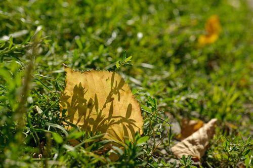 ruduo,Iš arti,geltonas lapas,šešėlis,vienatvė,rudens lapas,gamta