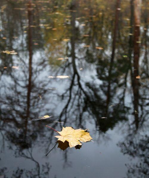 ruduo,vėlyvas ruduo,kritimo spalvos,gamta,plikas medžiai,kraštovaizdis,miškas,rudens spalvos,atsisakymas,liūdesys,rudens lapas,geltonas lapas,ežeras,atspindys,parkas,rudens gamta,geltonas lapas,geltona