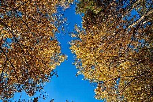 ruduo, medis, dabartinis sezonas, lapai, gamta, geltona, mėlynas, lapai yra, kraštovaizdis, fonas, tekstūra, margas lapai, spalva, augalas, taika, sausas, spalvotas vaizdas, be honoraro mokesčio
