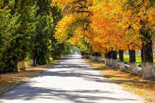 ruduo, miškas, Aukso ruduo, patenka spalvos, rudens lapai, lapkričio, ruduo gamta, pobūdį, rudenį miškas, medis, medžiai, lapai, rudens spalvos, kraštovaizdis, ruduo lapas